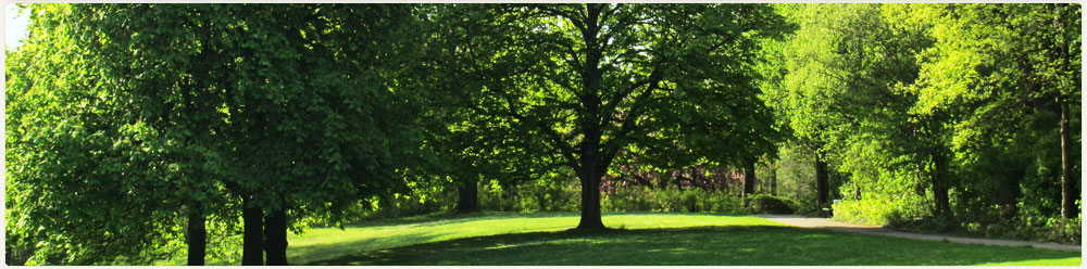 Elagh Tree Surgery